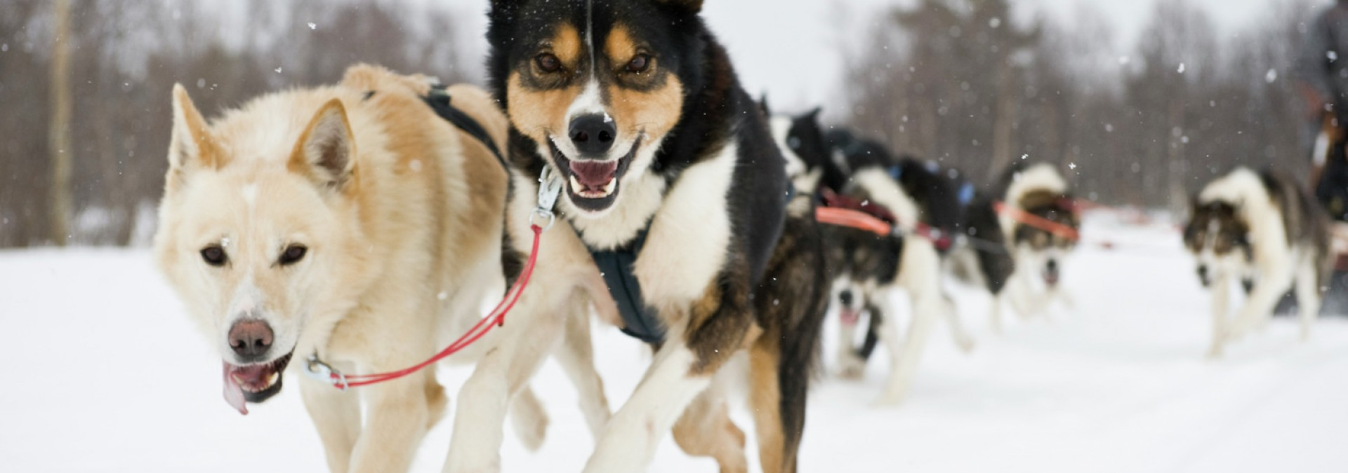 Huskies Terje RakkeNordic Life - Visitnorway.com & Innovation Norway.jpg